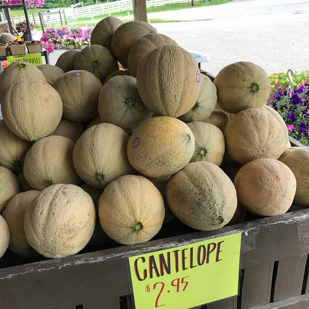 amish country cantaloupe