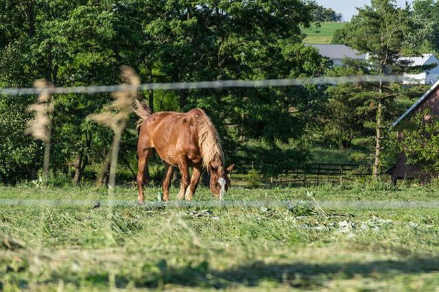 Horse-on-the-Farm