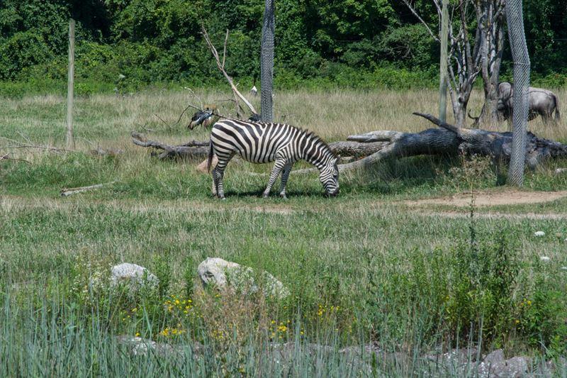 Columbus-Zoo-African-Safari