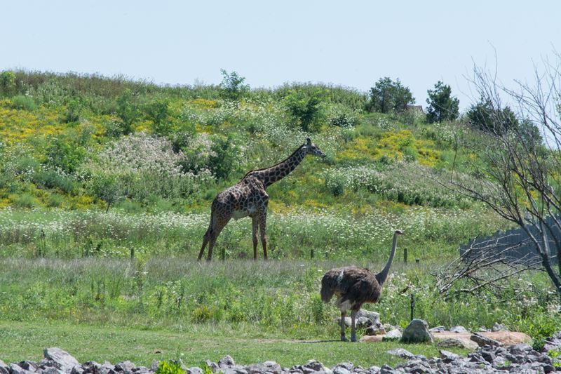 Columbus-Zoo-African-Safari-3