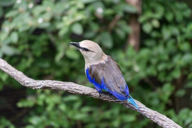 Columbus-Zoo-Bird