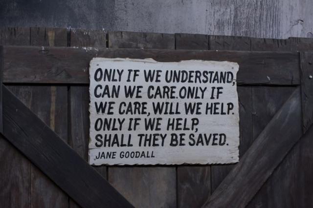 Jane-Goodall-Quote